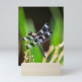 Twelve Spotted Skimmer - Back Mini Art Print