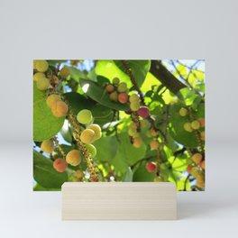 Sea Grape Mini Art Print