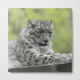 Leopard20151217 Metal Print