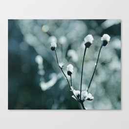 Blue frozen plants Canvas Print