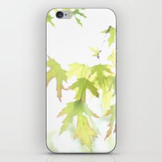 Soft Maple Leaves iPhone & iPod Skin