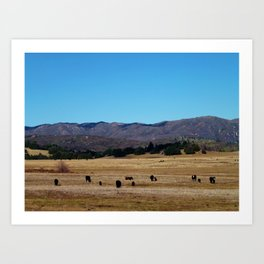 Cows In The Country Art Print