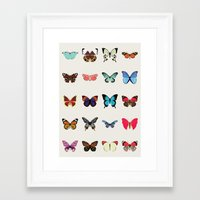 butterflies Framed Art Prints featuring Butterflies by Dorothy Leigh