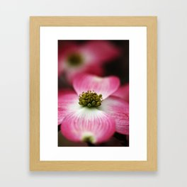 Pink Dogwood Framed Art Print