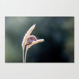 Harvest Mouse. Canvas Print