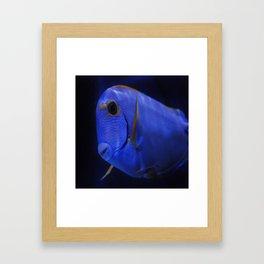 blue Tang 3 Framed Art Print
