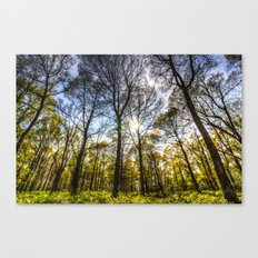 The Ancient Forest Canvas Print