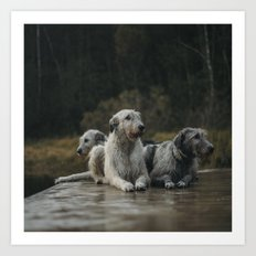 Irish Wolfhounds. Art Print