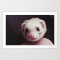 ferret Art Prints featuring ferret. by louise vance