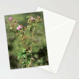 wild iao orchids Stationery Cards