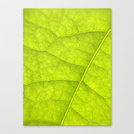 Close Up Photo of a Bright Green Leaf Canvas Print