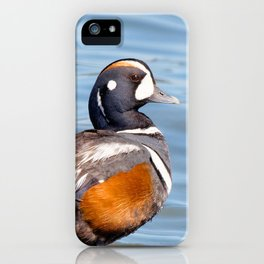 Beautiful Harlequin Duck on the Rocks iPhone Case