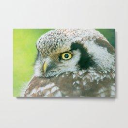 Northern Hawk Owl Metal Print