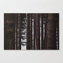 Through the Trees - Nature Photography Canvas Print