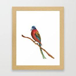 Study of a Bird 2 Framed Art Print
