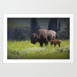 American Buffalo Bison Mother and Calf in Yellowstone National Park Art Print