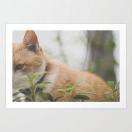Half a Cat Art Print