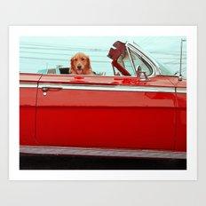 One cool dog Art Print