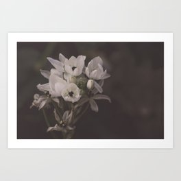 White flowers for you Art Print