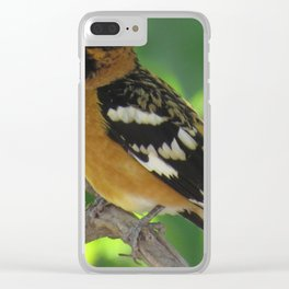 Blackheaded Grossbeak Clear iPhone Case