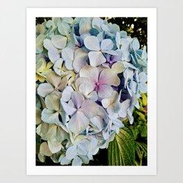 Beautiful hydrangea Art Print