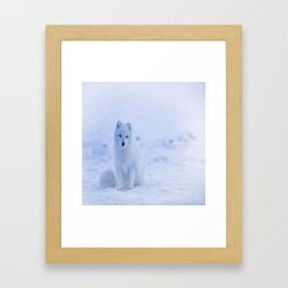 The Arctic Fox in Iceland Framed Art Print