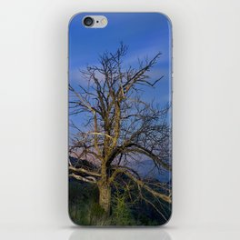 Centenary Chestnut at blue hour iPhone Skin
