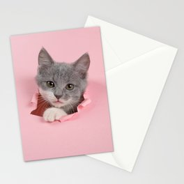 Gray Kitten Stationery Cards
