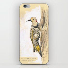 Yellow-shafted Flicker iPhone Skin