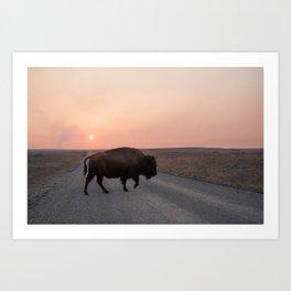 Sunset Buffalo  Art Print