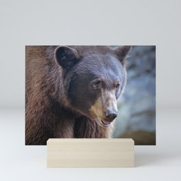 Bear Mini Art Print