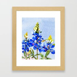 Bluebonnets 3 Framed Art Print