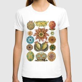 Ernst Haeckel Ascidiae Sea Squirts White Background T-shirt