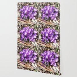 Watercolor Flower, Purple Crocus 01, Washington D.C., Spring Delights! Wallpaper