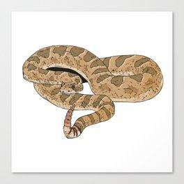 Sidewinder Rattlesnake Canvas Print