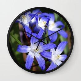 Early Spring Blue - Chionodoxa Wall Clock