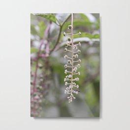 Mystery Plant Metal Print