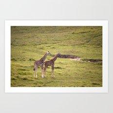 Young Giraffes Art Print