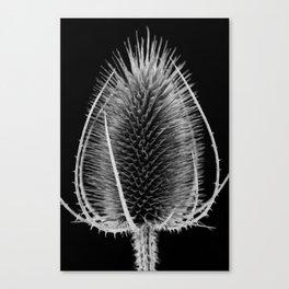 Black & White Teasel Canvas Print