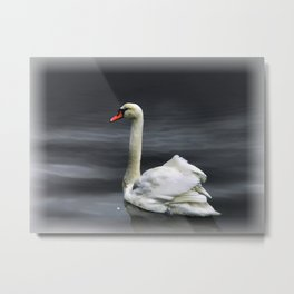 Single Swan I Metal Print