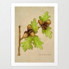 Quercus Robur Art Print