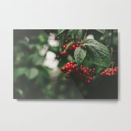 Winterberry Metal Print