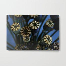 Poppy Flower Pods Bouquet Metal Print