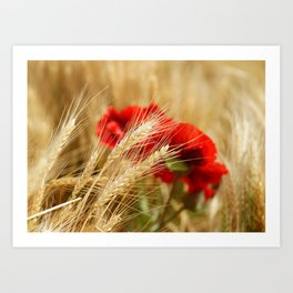 Field of golden wheat with red poppy flowers Art Print