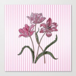 Maria Sibylla Merian: Three Tulips Canvas Print