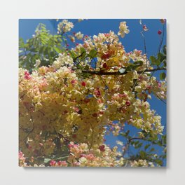 Wilhelmina Tenney Rainbow Shower Tree Metal Print