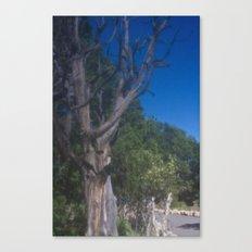 Grand Canyon Tree Canvas Print
