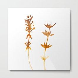 Thyme ( watercolor fill poster) Metal Print