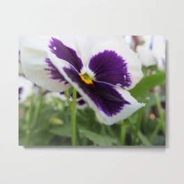 morning purple Metal Print