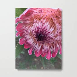 native flower Metal Print
